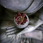 buddha-1277463_640